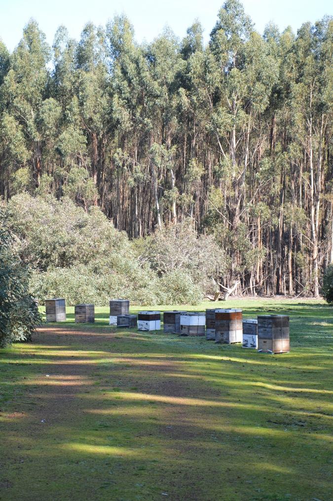 Beehives in Kangaroo Island Plantation Timbers property.